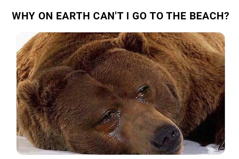 No-Bear--Israel-