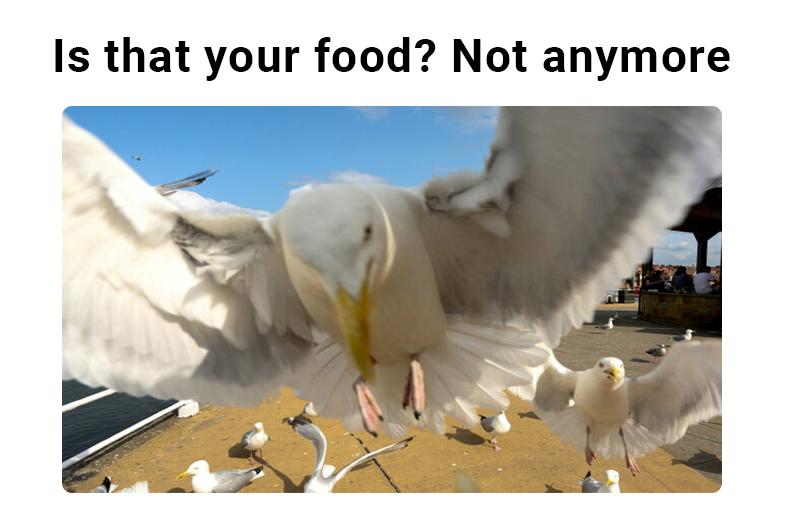 seagull-feed--GB-