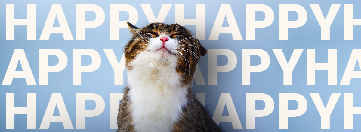 10 Signs Your Cat Is a Happy Cat