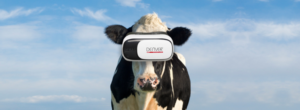 Cows in Russia Wear VR Glasses to Relieve Stress in the Winter Time