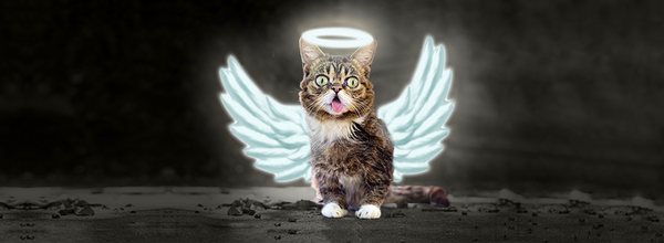 The Most Famous Instagram Cat Lil Bub Left This World After Grumpy Cat