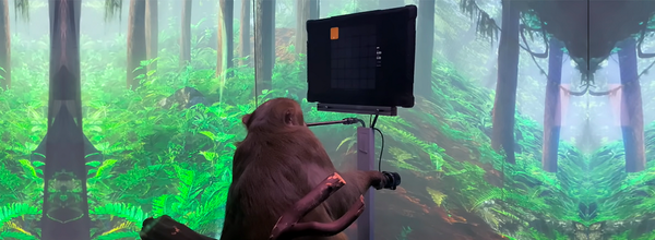 Elon Musk's Neuralink Taught a Monkey to Play Pong With Its Mind